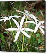 String Lily Canvas Print