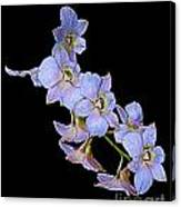 String Of Light Blue Orchids Canvas Print
