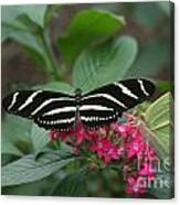 Striped Butterfly Canvas Print