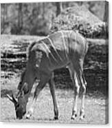 Striped Deer In Black And White Canvas Print