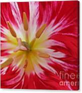 Striped Flaming Tulips. Hot Pink Rio Carnival Canvas Print