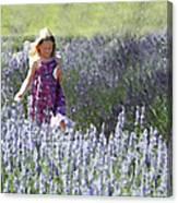 Stroll Through The Lavender Canvas Print