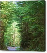 Stroll Through The Quinault Rain Forest Canvas Print
