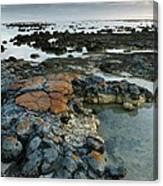 Stromatolites In Australia Canvas Print