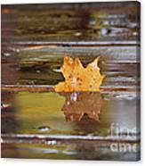 Stuck Maple Leaf Canvas Print
