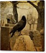 Study Of The Surly Raven Canvas Print