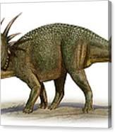 Styracosaurus Albertensis Canvas Print