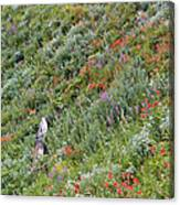 Subalpine Wildflowers Canvas Print