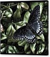Subdued Butterfly Canvas Print