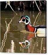 Sucarnoochee River - Suspicious Wood Duck Canvas Print