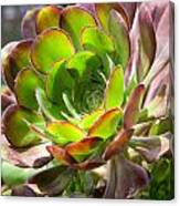 Succulant In Light Canvas Print