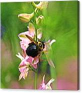 Such A Light Touch Canvas Print