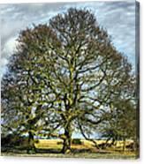 Suffolk Winter Landscape Canvas Print
