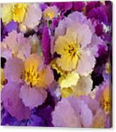 Sugared Pansies Canvas Print