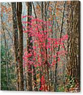 Sumac In Morning Light At Cumberland Falls State Park Canvas Print