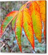 Sumac Leaves After The Rainfall Canvas Print