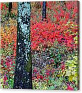 Sumac Slope And Lichen Covered Tree Canvas Print