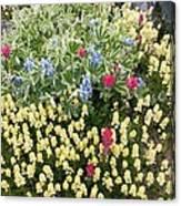 Summer Alpine Flowers Canvas Print