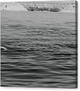 Summer At Lake Mead Canvas Print
