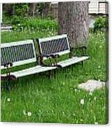 Summer Bench And Dandelions Canvas Print