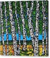 Summer Birches Canvas Print