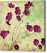 Summer Cosmos Canvas Print