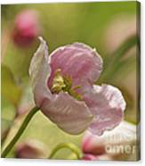 Summer In Pink Canvas Print
