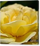 Summer Loves A Rose Canvas Print