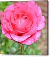 Summer Pink Rose Floral Canvas Print