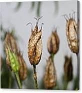 Summer Seeds Canvas Print