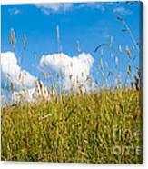Summer Serenity Canvas Print