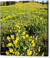 Summer Splendor In Yellowstone Canvas Print