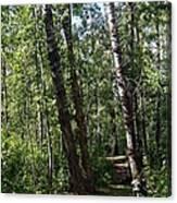 Summer Trail Canvas Print