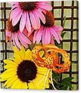 Summer Trio  Canvas Print