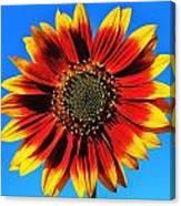 Summerflower Canvas Print