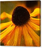 Summers Bloom Canvas Print