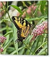 Summer's Flying Tiger  Canvas Print