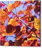 Summers Palette Canvas Print