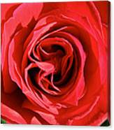 Summer's Red Rose  Canvas Print