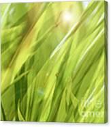 Summertime Green Canvas Print