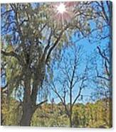 Sun And Trees - 4 Canvas Print