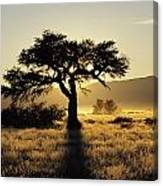 Sun Coming Up Behind A Tree In African Canvas Print