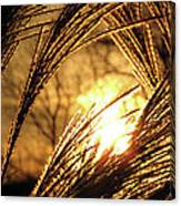 Sun In Grass Panoramic Canvas Print