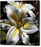 Sun Kissed Lily Canvas Print