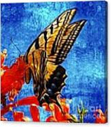 Sun Lit Eastern Tiger Swallowtail Canvas Print