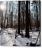 Sun On The Wild Turkey Trail Canvas Print