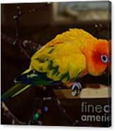 Sun Parrot Canvas Print