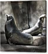 Sunbathing Seals Canvas Print