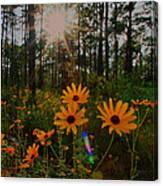 Sunburst On Sunflowers Canvas Print