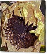 Sunflower 13 Canvas Print